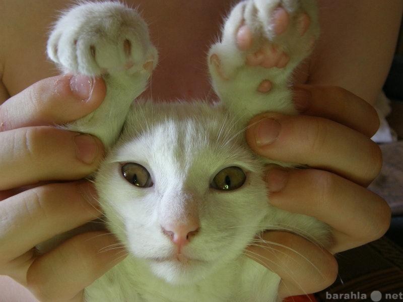 Отдам даром Котик!