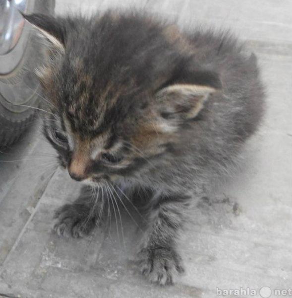 Отдам даром котенок мальчик