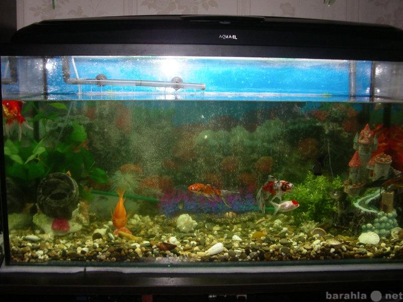 Продам аквариум 200 л