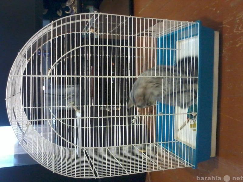 Продам: клетка для попугая
