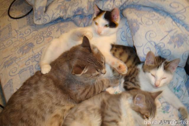 Отдам даром Умные, красивые котята в добрые руки!