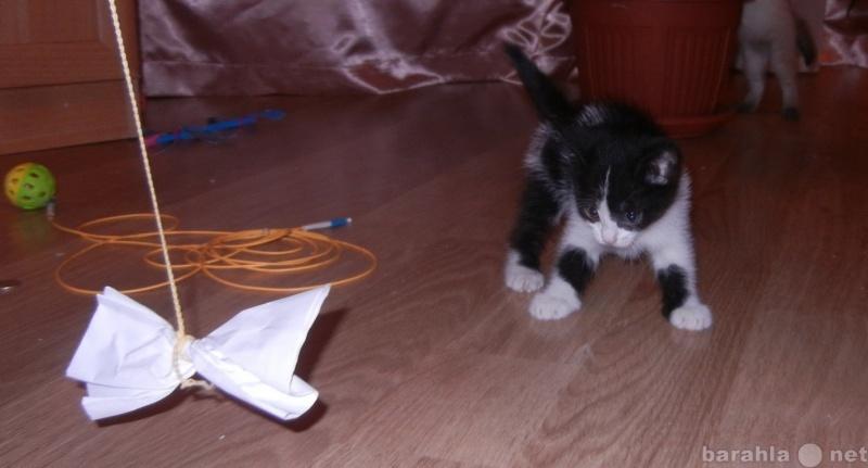 Отдам даром Чёрно-белый котёнок