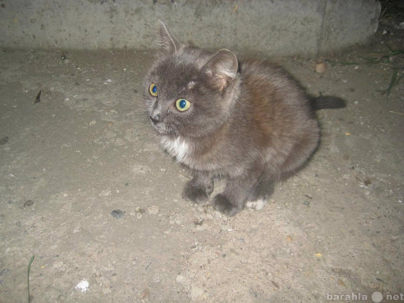 Отдам даром ласковую котенка-девочку