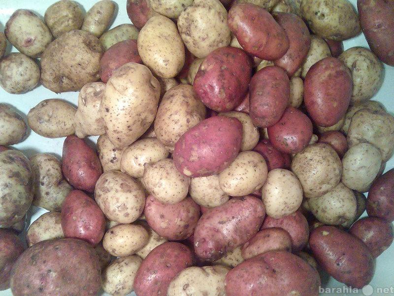 Продам Продам картошку