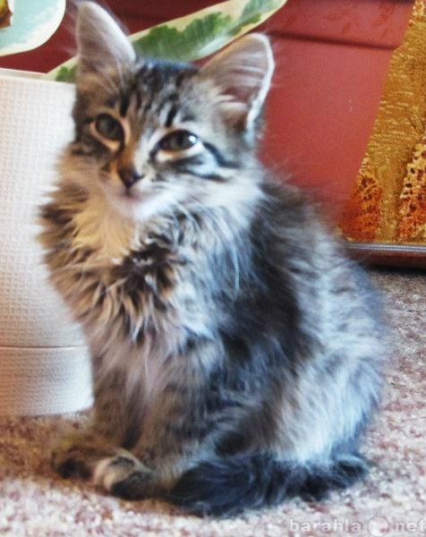 Отдам даром Отдам в хорошие руки маленького котенка
