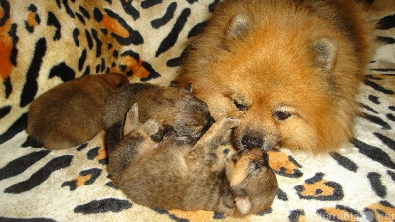 Инна михайлова беременна пятым ребенком 4