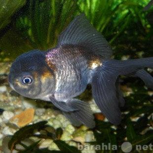 Куплю Купим аквариумных рыб и земноводных опто