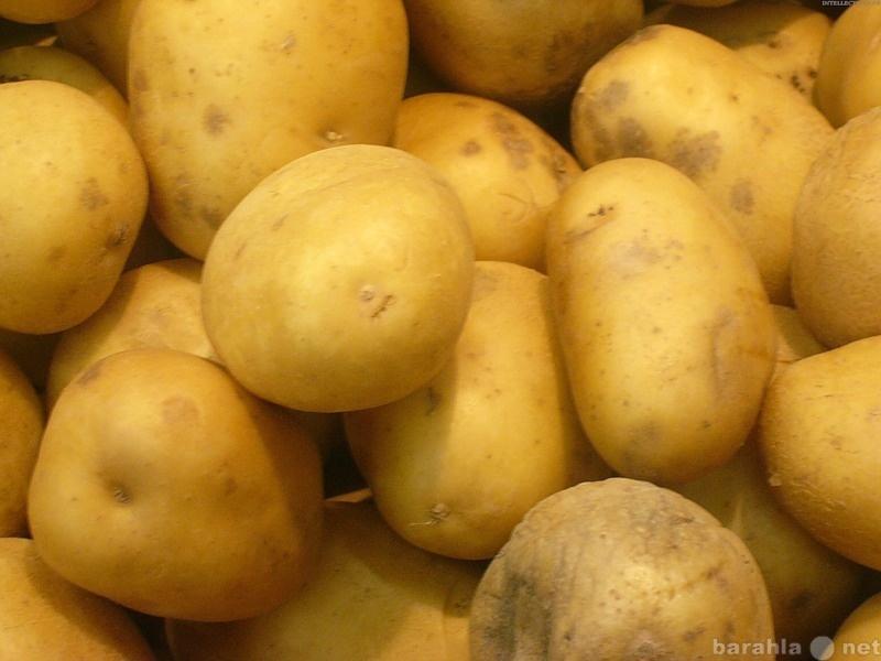Куплю Картофель оптом закуп