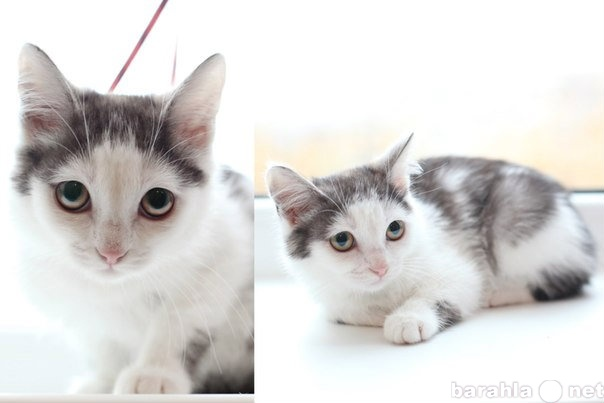 Отдам даром: Котенок 2мес