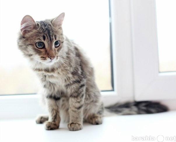 Отдам даром: Кошечка 4мес