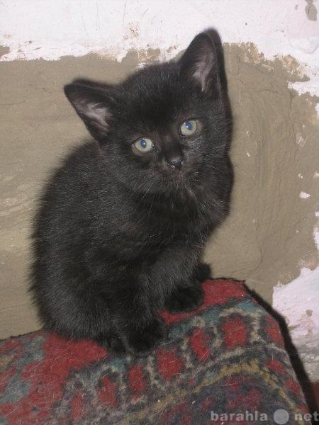 Отдам даром Чёрный котёнок