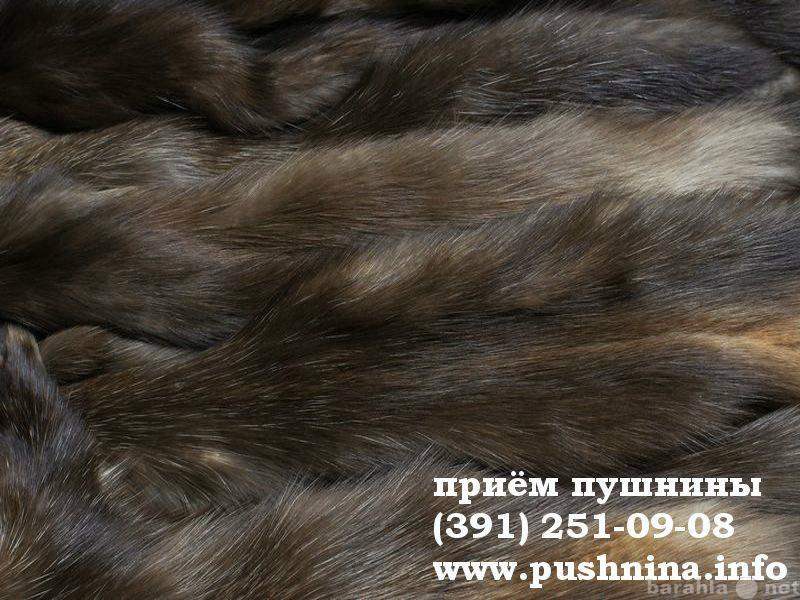 Куплю: Мех соболя в Красноярске