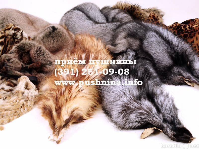 Куплю: Соболиный мех в Красноярске