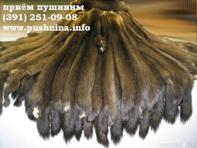 Куплю: Закупаем мех соболя в Красноярске