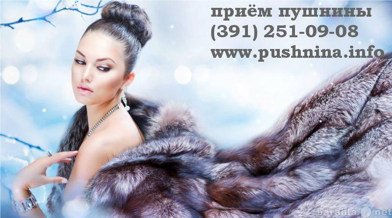 Куплю: Принимаем мех соболя в Красноярске