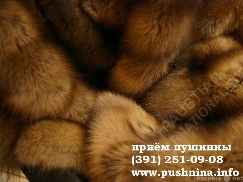 Куплю: Принимаем мех соболя Красноярск