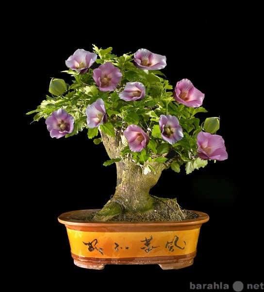 Продам: Семена цветов - оправка в регионы