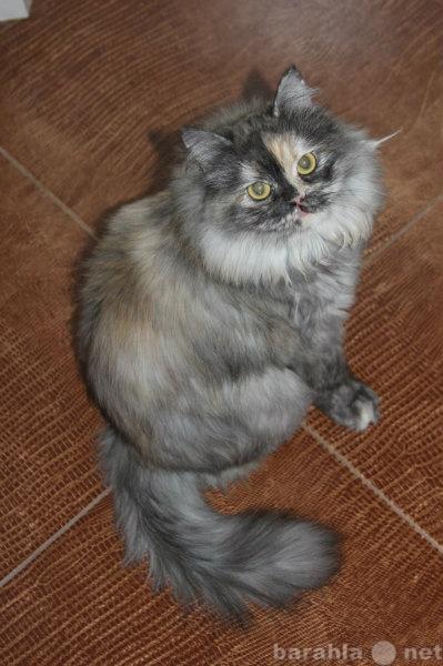 Отдам даром Шикарная молодая кошка