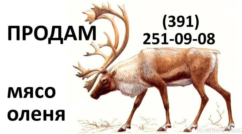 Продам мясо северного оленя Красноярск