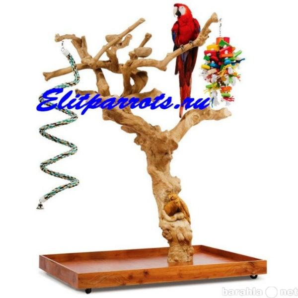 Продам Насесты из кофейного дерева для попугаев