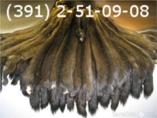 Продам соболиные шкуры в Красноярске