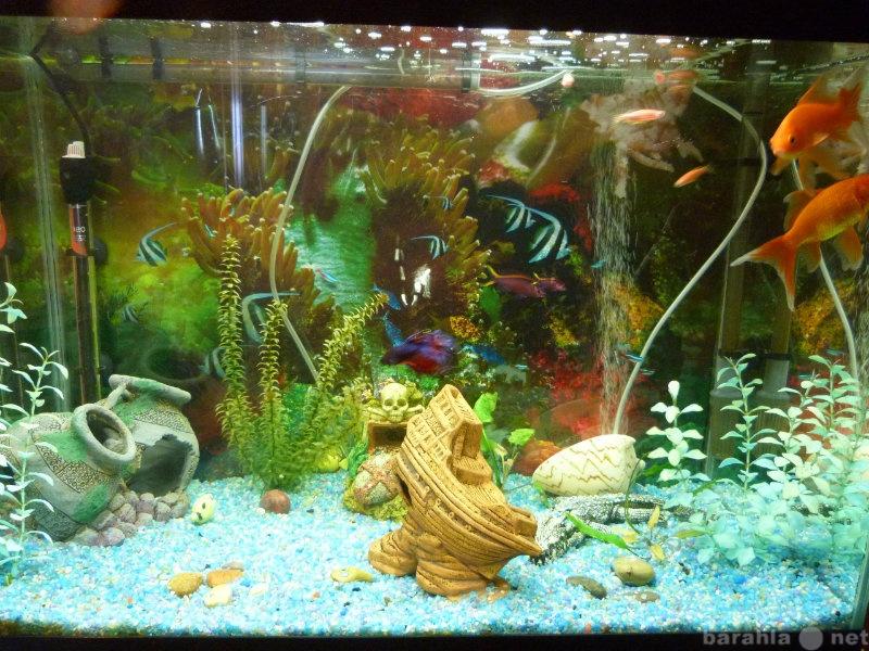 Продам Продам аквариум и его обитателей
