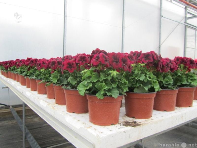 Цветы доставка, доставка почтой по украина цветов славянск на кубани