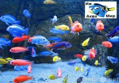 Продам рыбок .корм аквариумы и тд