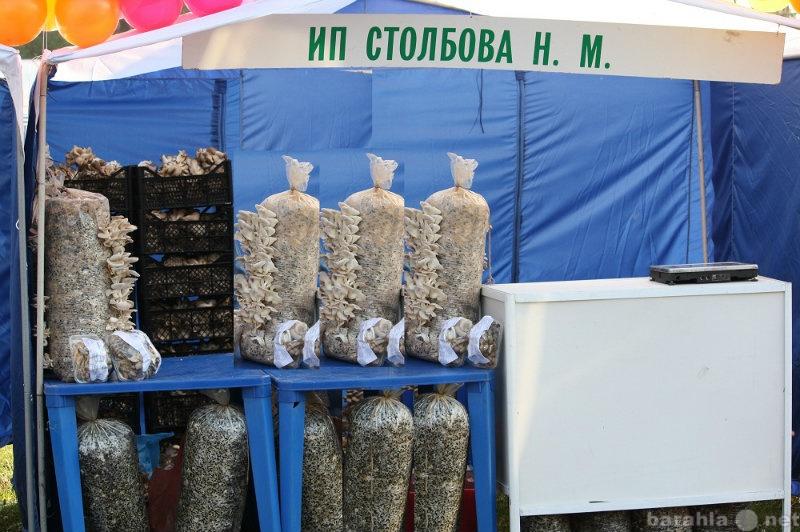 Продам Зерновой мицелий Вешенки, зимнего опёнка