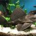 Продам Аквариум+рыбки