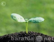 Продам Чернозем,плодородный грунт-самые выгодны