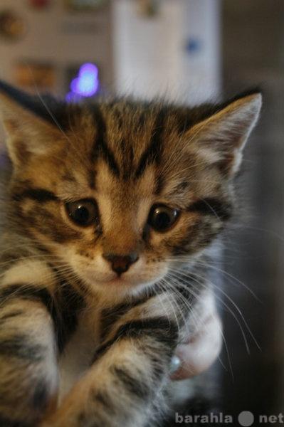 Отдам даром Котята в хорошие руки
