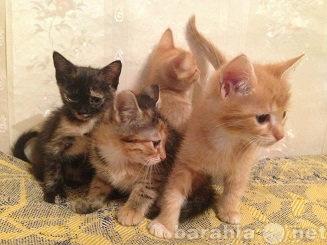 Отдам даром: Котята в добрые ручки!