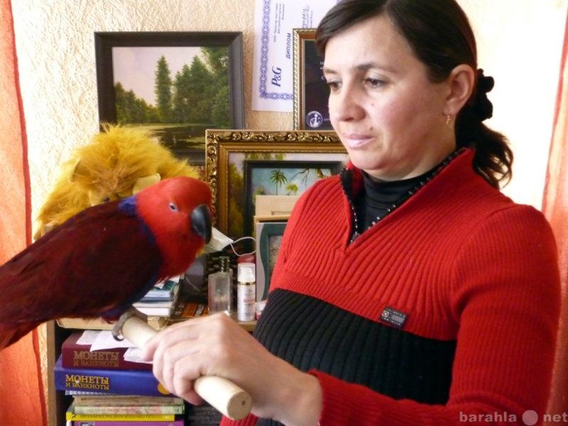 Продам Крупных и средних попугаев