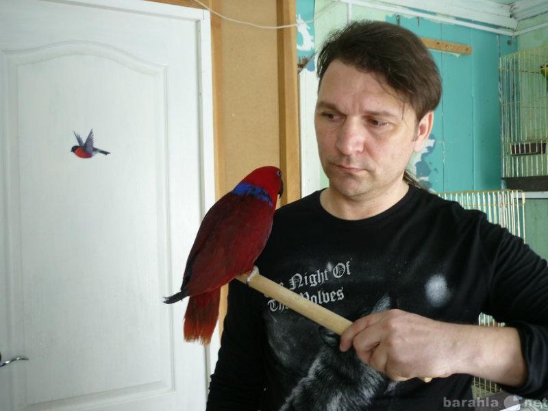 Продам Крупных попугаев
