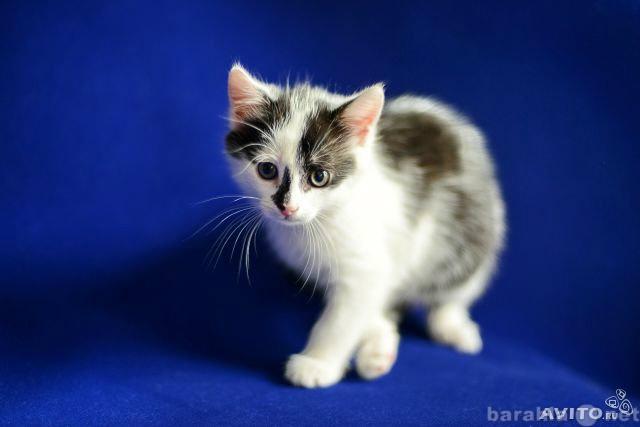 Отдам даром милейших котят