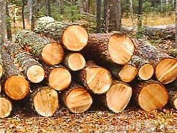 Продам Продам лес кругляк