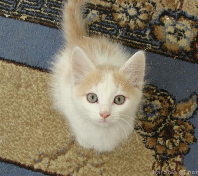 очень ранимы, котята уфа в дар фото большей степени, чем