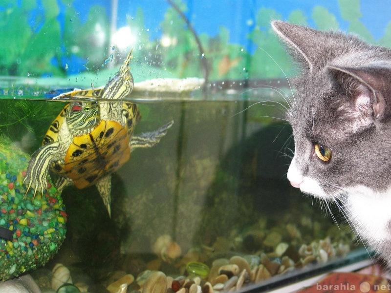 Продам Черепаха Красноухая с акватеррариумом