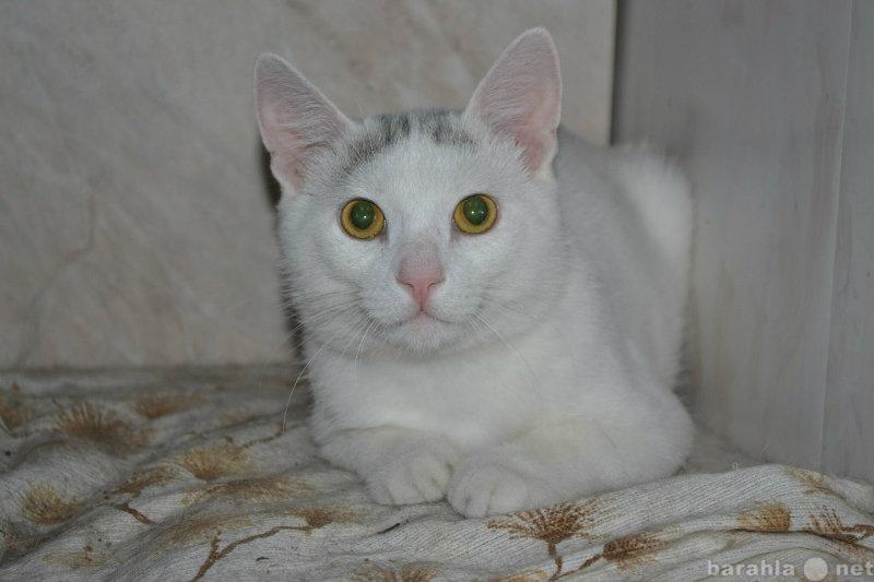 Отдам даром Кот ищет дом