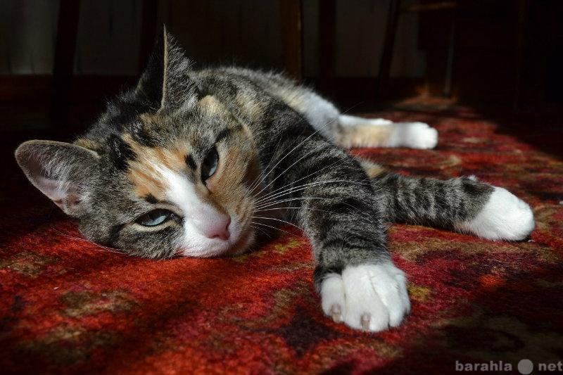 Отдам даром Кошка Вася ищет дом