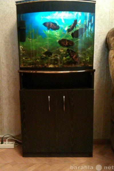 Продам: аквариум 60 л с тумбой и рыбки