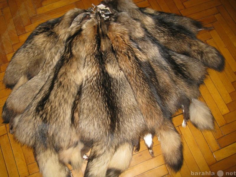 Продам Шкургы енонтовидной собаки.