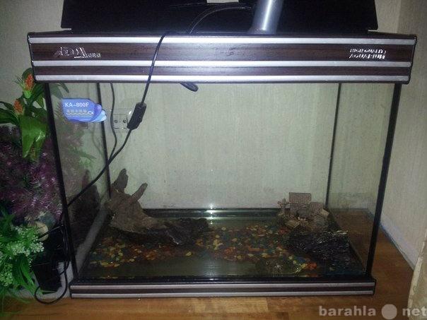 Продам оборудованный аквариум с 3-мя черепахами