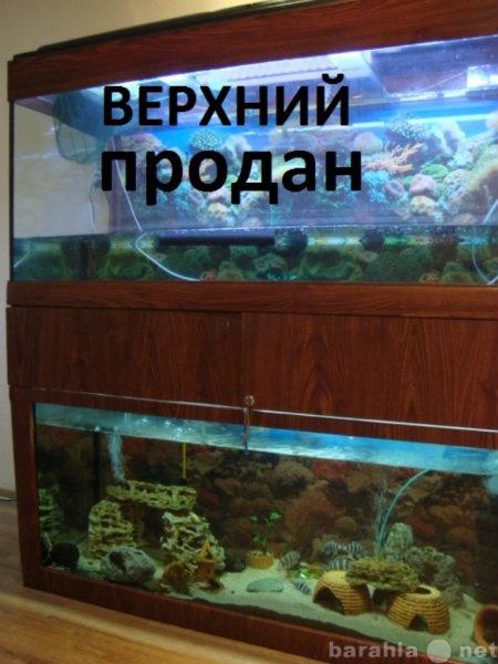 Продам Система аквариумная