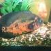 Продам аквариум с рыбами