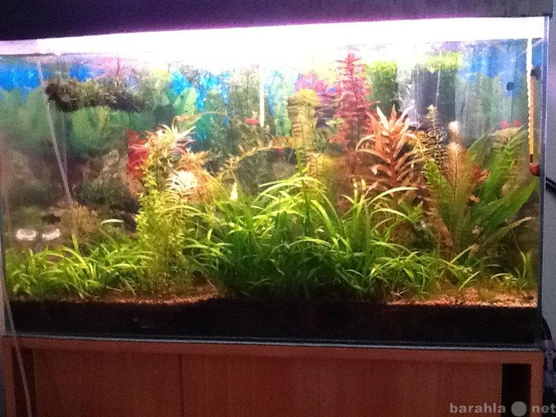 Продам Аквариумные растения