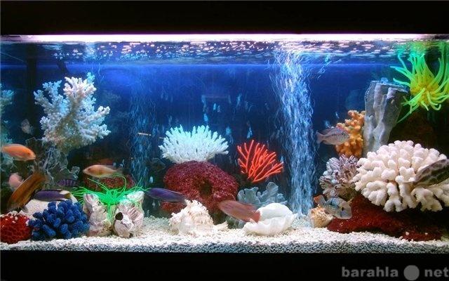 Продам аквариумные рыбки растения раки креветки
