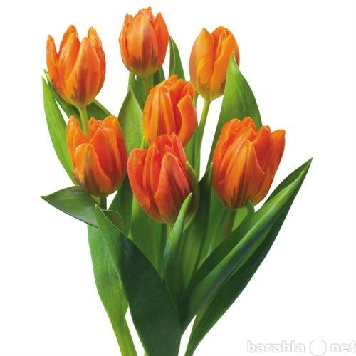 Купить тюльпаны оптом в томске купить свежие белые розы