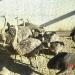 Продам Страусы Африканские и Австралийские (Эму